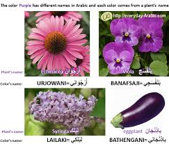 Names And Images Of Flowers - everyday arabic العربية لكل يوم