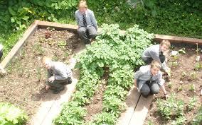 ten great gardening tips
