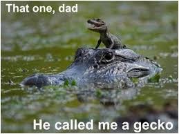Interior Crocodile Alligator Now You U0027re In Trouble