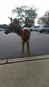 11alive tame deer shopping roswell
