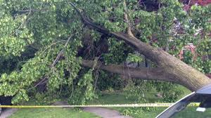 Tree Man At Backyard Bbq Killed By Falling Tree In Flash Storm Police