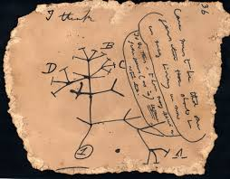 charles darwin s unpublished tree of black text