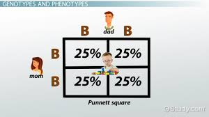 punnett square definition u0026 example video u0026 lesson transcript