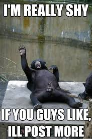 Funny Gorilla Memes - 35 most funniest bear meme pictures and photos