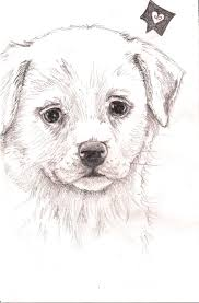gallery pencil drawing of puppys drawing art gallery