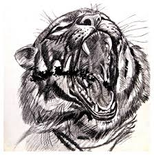 my artwork a sketch of a tiger roar lol pencil on paper