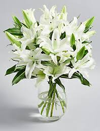 white lilies lilies white lilies flowers bouquets plants m s