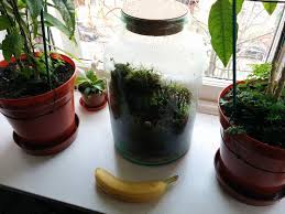 sealed bottle garden 233 best make my apartment a jungle images on pinterest indoor