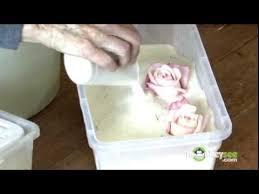 Preserve Wedding Bouquet Preserving The Bouquet Youtube