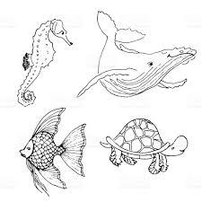 drawn creature ocean animal pencil and in color drawn creature