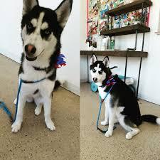 doggone good grooming 15 photos u0026 56 reviews pet groomers