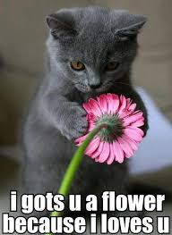 Cute Kittens Memes - 35 cats with totally cool cat marking funny memes memes and flower