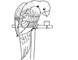 parrot coloring drawing free wallpaper anggela coloring book for