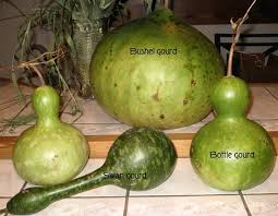 16 best types of gourds images on gourds gourd