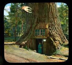 of california research tree house in lilley redwood
