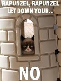Meme Angry Cat - grumpy cat meme gummy cat pinterest grumpy cat grumpy cat