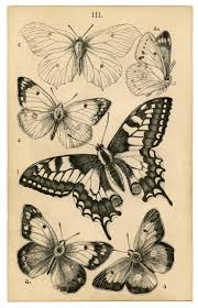 best 25 butterfly drawing images ideas on pinterest butterfly