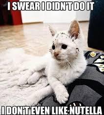 Cat Problems Meme - white cat problems