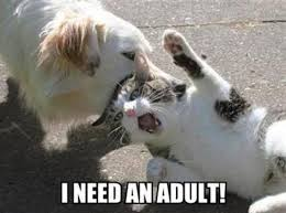 I Need An Adult Meme - i need an adult know your meme