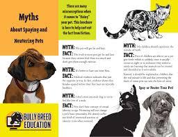 american pitbull terrier traits bully breed education