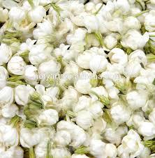 Jasmine Flowers Price Of Jasmine Flower Price Of Jasmine Flower Suppliers And