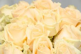 Peach Roses Send Bouquet Of 15 19 Or 25 Peach Roses To Kiev Ukraine With