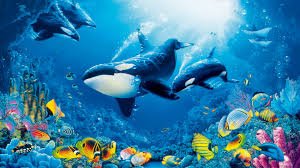 underwater world coral reef colorful fish marine fauna with