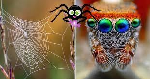7 alasan untuk tidak takut pada laba laba erabaru