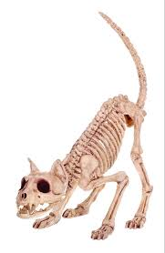 halloween skeleton bones compare prices on cat skeleton online shopping buy low price cat