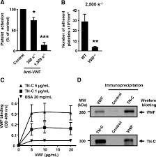 novel function of tenascin c a matrix protein relevant to