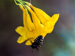 texas native plants database williamson county chapter npsot wilco native plant society of