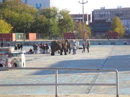 new york city diary an elephant in mccarren park pool