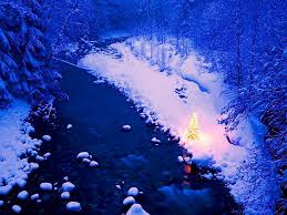 winter lights glow little touch night winter christmas tree trees