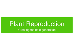 ppt plant reproduction powerpoint presentation id 1398395