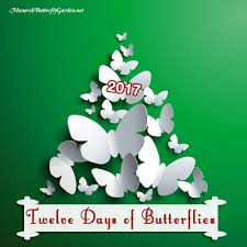 twelve days of butterflies butterfly gift ideas for 2017