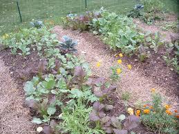 Ideal Vegetable Garden Layout Small Space Gardens Veggie Gardening Tips