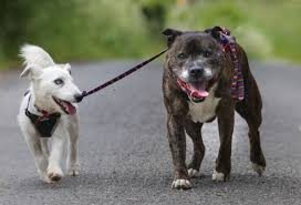 Blind Dog And His Guide Dog Blind Dog Has His Own Guide Dog