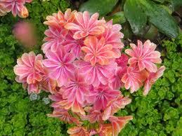 native flowering plants chickadee gardens happy 2015 more garden worthy native plants to