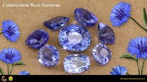 corn flower blue cornflower blue sapphire and beautiful