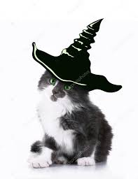 cat with witch hat for halloween u2014 stock photo belchonock 82340666