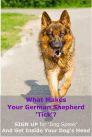 south australian german shepherd breeders german shepherd breed types which is right for you