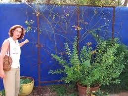 13 best wall trellis images on pinterest wall trellis garden