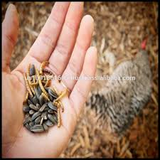poultry feed mealworms poultry feed mealworms suppliers and