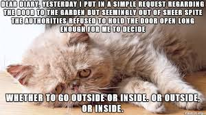 Sad Cat Memes - sad cat diaries time to revisit life with cats