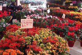 los angeles florist 28 flowers in los angeles kate bizi florist in los angeles