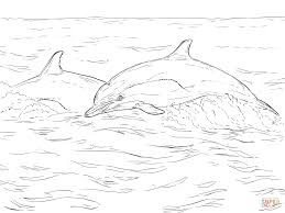 short beaked common dolphin coloring page free printable