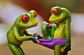 free images green hibian fauna tree frog curiosity