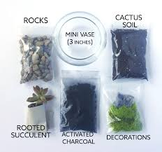 terrarium kit mini succulent terrarium kit diy terrarium kit