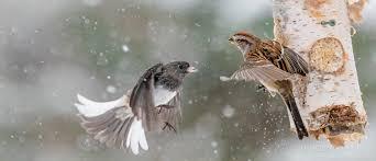 who is the toughest bird feederwatch