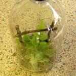 make a rainforest terrarium
